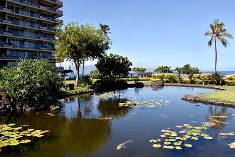 Maui Condo Rentals Fish Pond View